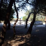 pinewood_in_porto_santelpidio_and_sea